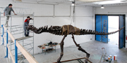Stan fossil reconstruction of T.rex